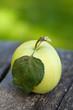 single apple on wooden garden table