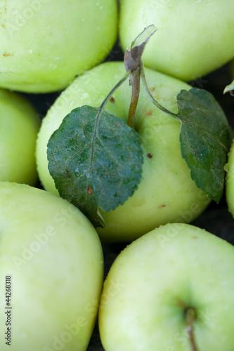 fresh apple background