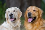 Portrait of two young beauty dogs - 44268967