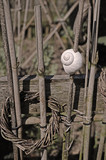 Snail shell as garden decoration