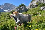 Fototapety Jungrind betrachtet Blumen im Gebirge