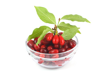 Dogwood berries in a glass bowl