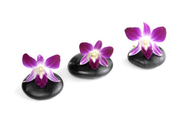 Three set of orchid flower on top of spa/massage stones