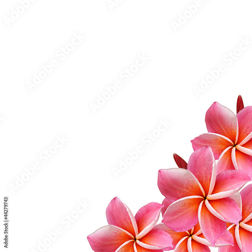 Frangipani flowers border design