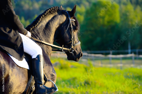 Spoed canvasdoek 2cm dik Paardensport Black Friesian horse in the sunset with rider