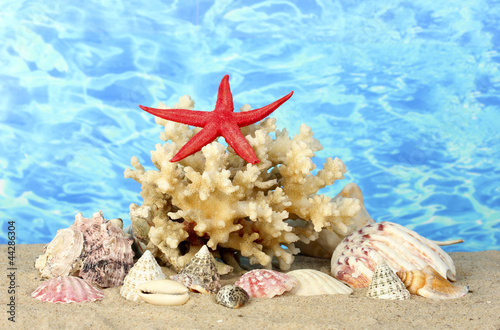 Foto op Plexiglas Cyprus Sea coral with shells on water background close-up