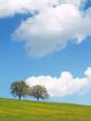 canvas print picture - Bäume mit Himmel 15