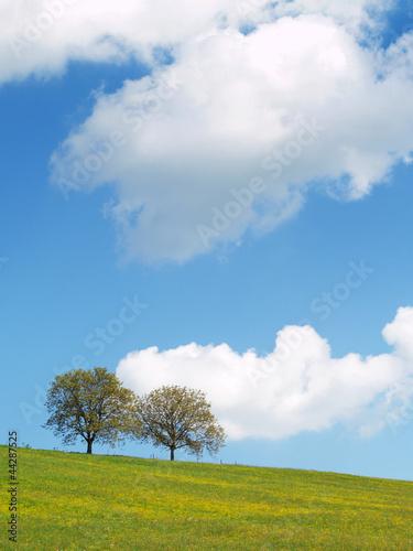 canvas print picture Bäume mit Himmel 15