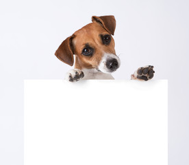 Dog with placard