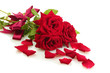three beautiful red roses with drops isolated on white
