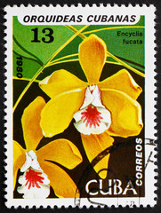 Postage stamp Cuba 1980 Brown Veined Encyclia, Orchid