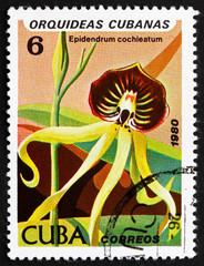 Postage stamp Cuba 1980 Black Orchid, Epidendrum Cochieatum