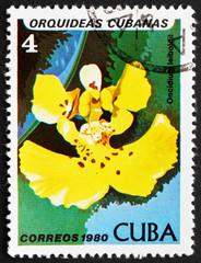 Postage stamp Cuba 1980 Oncidium Leiboldii, Orchid
