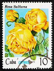 Postage stamp Cuba 1979 Rose, Rosa Rosa Sulfurea
