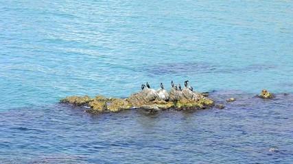 aves rocas