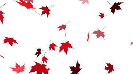 HD Loopable Falling Maple Leaves Animation