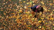 Pretty young woman collecting maple leaves at autumn