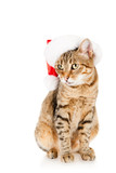 Cat in a Santa Claus hat, isolated on white