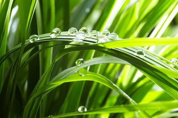 krople wody na zielonej trawie