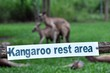 Kangaroo rest area