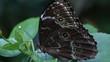 Closeup of butterfly on a flower in garden