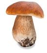 Mushroom - 44313563
