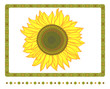 Sunflower with borders