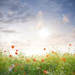 Wildblumen im Sonnenschein