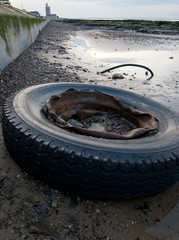 Litter on beach. Old car tyre washed up on beach.