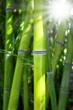 Fototapeten,bambus,wellness,grün,asien