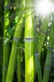 Fototapety Bambus mit Sonnenschein
