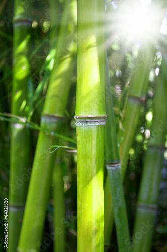Bambus mit Sonnenschein © Stockwerk-Fotodesign