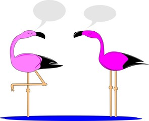 flamingos chatting with bubbles over white