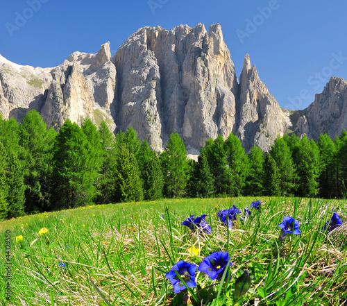 Szczyty Dolomitów, Rosengarten, Val di Fassa, Włochy Alpy
