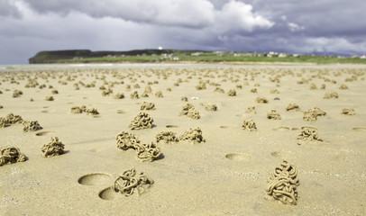 strand in schottland mit wurm häufchen