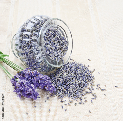 Lavender flowers - dry and fresh (Lavendelblüten)
