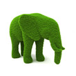 Animal elephant shaped hedge on a white background.