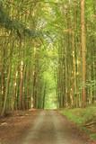 Waldweg in einem sommerlichen Buchenwald