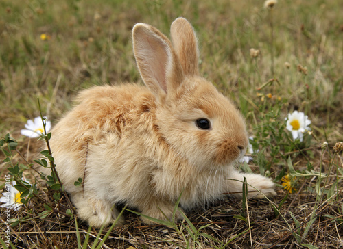 Rabbit baby bunny in green grass meadow
