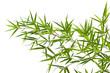 Fototapeten,bambus,china,bambus,pflanze