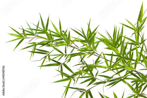 Fototapeten,bambus,china,bambus,bambus