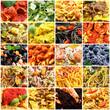 italian food gollage