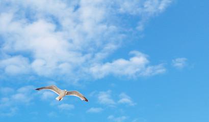 Kommt ein Vogel geflogen