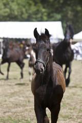 Fohlen Pferd Kopf