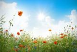 Mohnblumenfeld im Sonnenschein