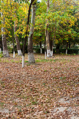 trees in the park in autumn