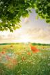 Wildblumenfeld mit Mohnblume und Kornblume im Spätsommer