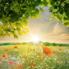 Mohnblumenfeld im Sonnenuntergang
