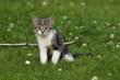 Kätzchen hängt auf Stöckchen