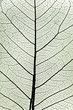 tree leaf close up